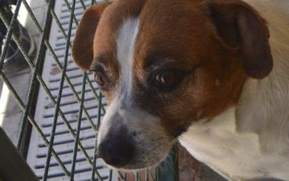 El Ayuntamiento de Ingenio pide la colaboración ciudadana para evitar el abandono y maltrato de animales