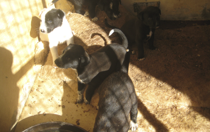 La AAVI pide la colaboración ciudadana para continuar su labor altruista de atención y cuidados de animales abandonados
