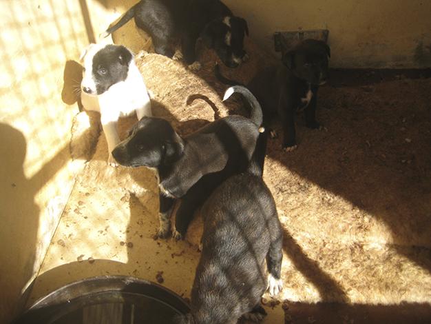 centro_animales2