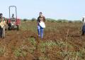 El Ayuntamiento de Ingenio promueve medidas para impulsar el sector agropecuario y comercial